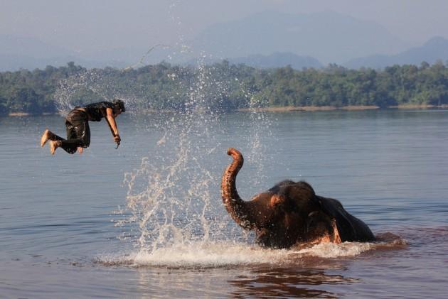 Elephant Catapult